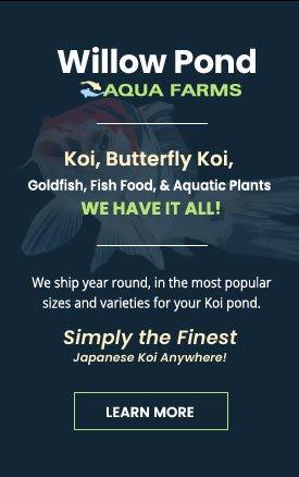 Japanese Koi Farm - Koi, Goldfish, Aquatic Plants, Pond Supplies Rochester NY