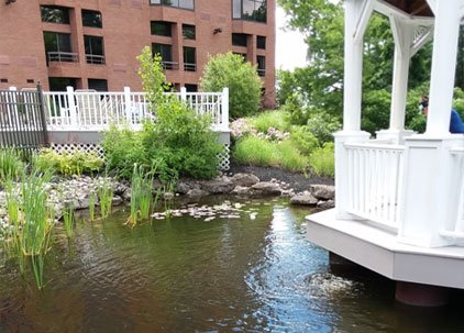 pond water quality testing management rochester syracuse ny