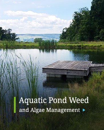 Aquatic Pond Weed Algae Management Treatment