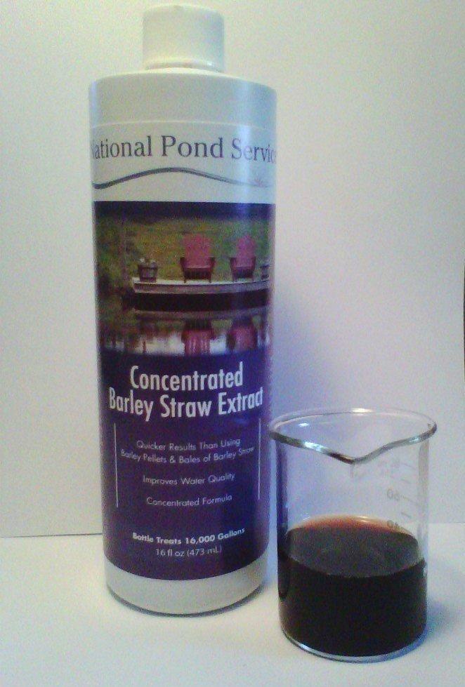 barley straw extract, liquid