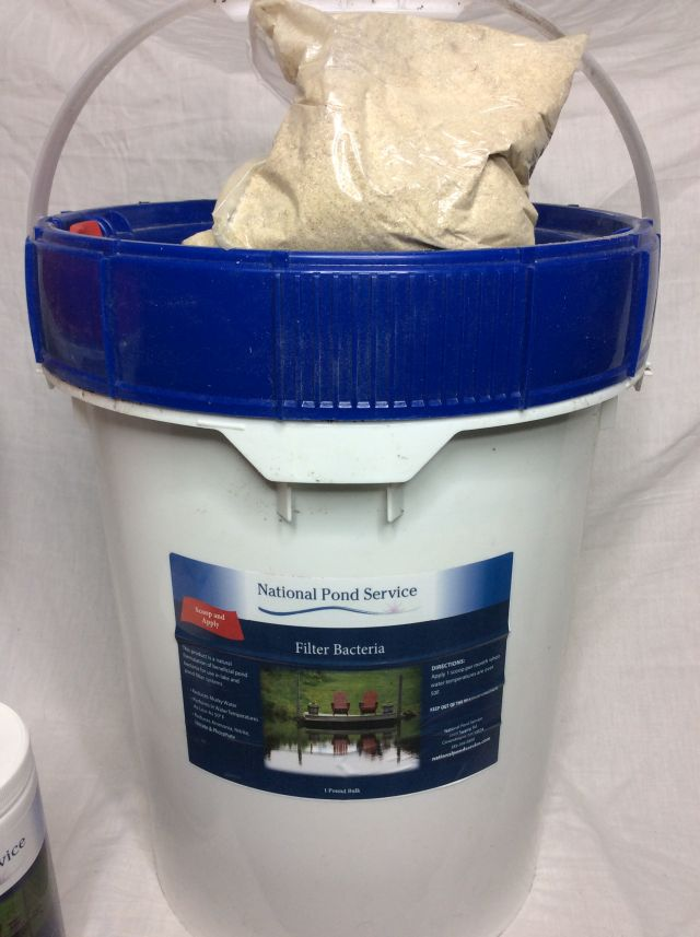 pond water filter bacteria treatment