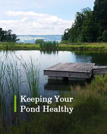 Keeping Your Pond Healthy