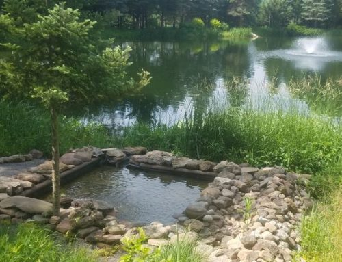 Why Pond Filtration is So Important