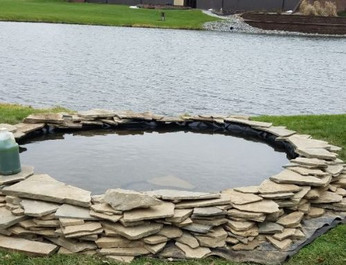 Autumn Leaves May be Adding Unwanted Nutrients to your Pond