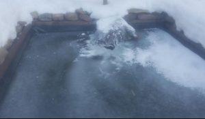 Natural Pond Filtration System