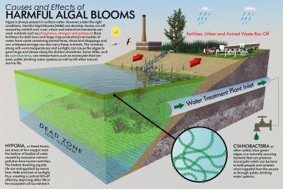 harmful algal blooms diagram