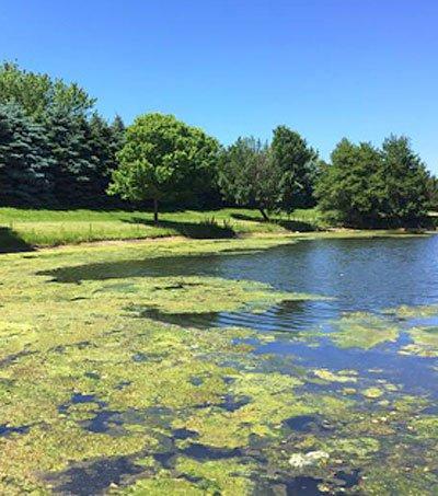 pond lake algae mitigation