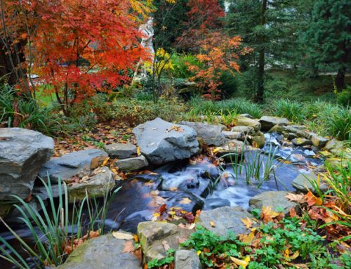 Considering a Water Feature?
