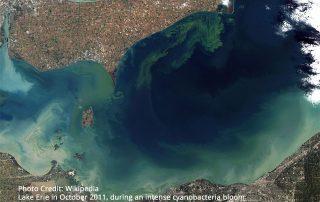 Lake Erie in October 2011, during an intense cyanobacteria bloom