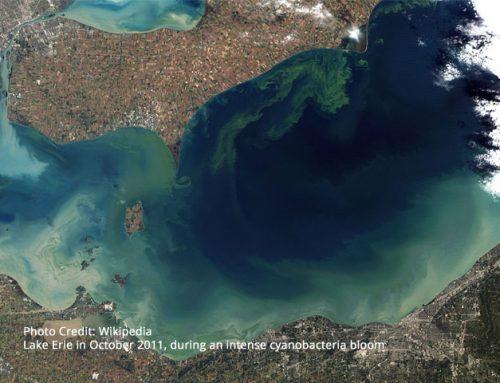 Toxicology of Microsystins – California EPA Report – Cyanobacteria