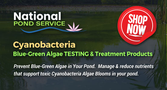 Cyanobacteria pond water test kit