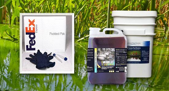 cyanobacteria toxic blue green algae pond water treatment products