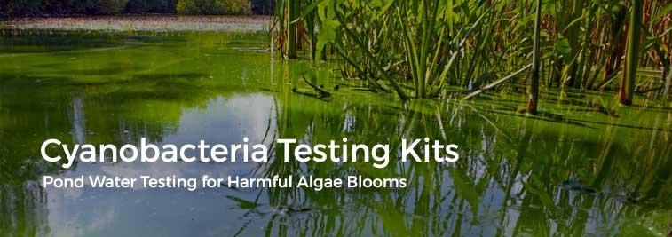 cyanobacteria blue green pond algae test kits