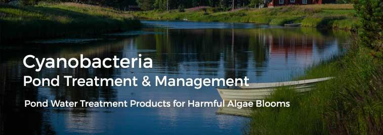 cyanobacteria pond water treatment harmful algae blooms