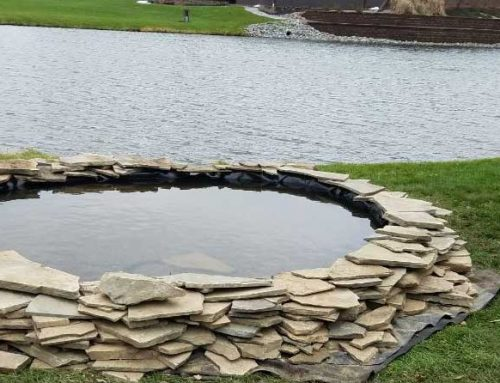 Treating Blue-Green Algae Blooms in Your Pond