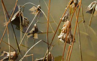 pond oxygen depletion treatment