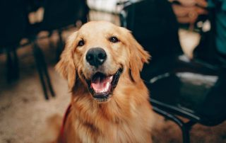 preventing toxic algae poisoning dog pets